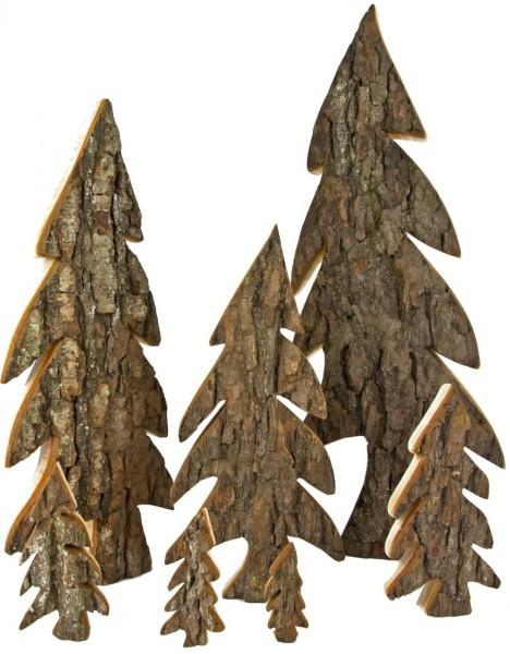 Baum mit Rinde, Holztanne mit Rinde